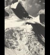 Ansel 