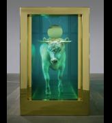 Damien Hirst. <em>The Golden Calf</em> (end), 2008. Calf, 18 carat gold, glass, gold-plated steel, silicone and formaldehyde solution with Carrara marble plinth, 84.8 x 126 x 54 in. / 215.4 x 320 x 137.2 cm. &copy; Damien Hirst