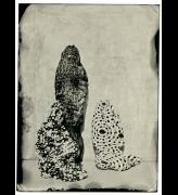 Lucía Pizzani. Impronta Series, 2013. Wet collodion processed photography printed on cotton paper, 40 x 30 cm.