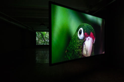Allora & Calzadilla. The Great Silence, 2014. 3-channel HD video installation, 16:22 minutes. Courtesy of the artists. In collaboration with The Fabric Workshop and Museum, Philadelphia. Photograph: Carlos Avendaño.