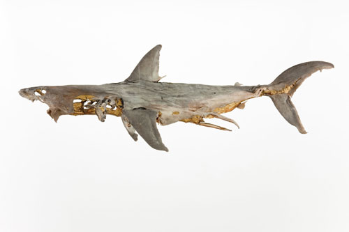Dorothy Cross. 