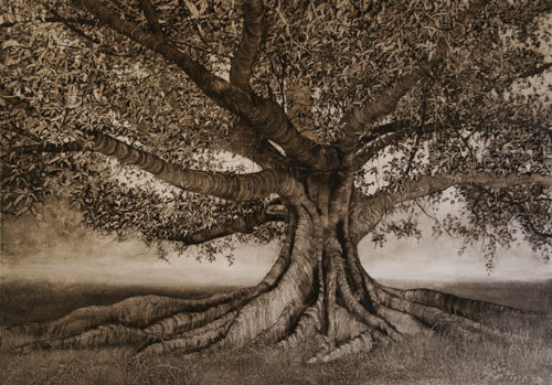 Nicholas Blowers. <em>Fig with extending roots,</em> 2006. Oil on paper, 69 x 100 cm