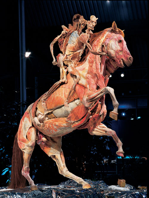 Professor Gunther von Hagens, Horse and rider, installation view.