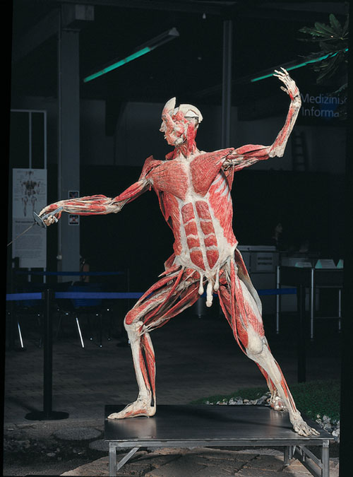 Professor Gunther von Hagens, The Swordsman, installation view.