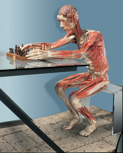 Professor Gunther von Hagens, The Chess Player, installation view.