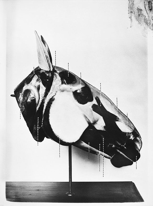 Sofia Borges. The Head of a Horse, 2013. 230 x 150 cm. The Swamp (MACK, 2016).