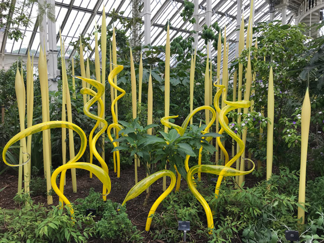 Dale Chihuly. Yellow Herons and Reeds, blown glass, 2019. Royal Botanic Gardens, Kew, London 2019. Photo: Anna McNay.