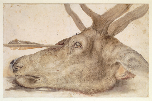 Albrecht Dürer. Deer's head pierced with an arrow, 1504. Drawing and watercolour on paper, 25.2 x 39.2 cm. Paris, Bibliothèque nationale de France, département des Estampes et de la Photographie. Photograph © BnF, Dist. RMN-Grand Palais / image BnF.