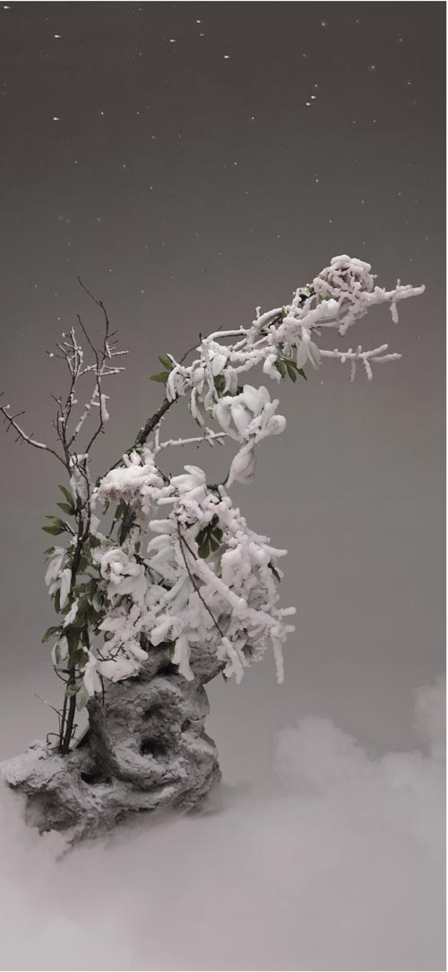 Qingsong Wang. <em>Frosted Peony</em>, 2003. Type C-print, 50x110cm. Courtesy of the artist.