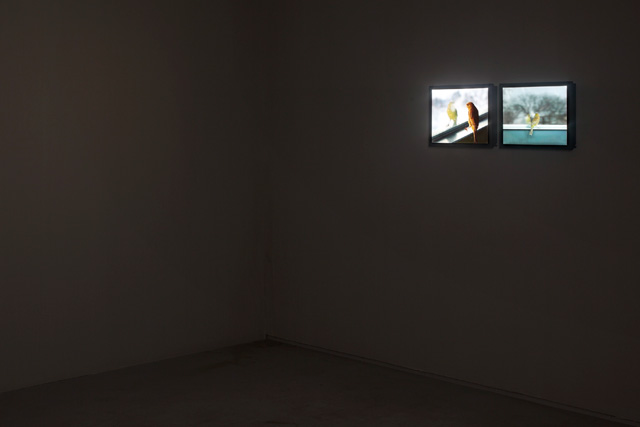Installation view of Breathing Bird at the Tel Aviv Museum of Art, Helena Rubinstein Pavilion, Tel Aviv, Israel, 2012. Photograph: Elad Sarig. Courtesy of the artist and Sean Kelly, New York.