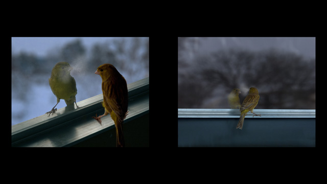 David Claerbout. Breathing Bird, 2012. Two channel video on flatscreens (19 in), colour, silent. Edition of 5 with 1 AP and 1 AC. © David Claerbout. Courtesy of the artist and Sean Kelly.