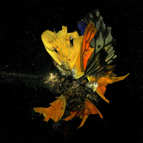Mat Collishaw. Insecticide 13, 2009. C-type photograph, 182 x 182 cm. Courtesy of the artist and Blain|Southern.