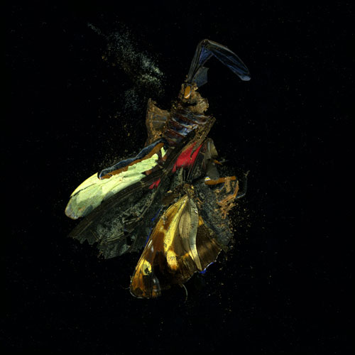 Mat Collishaw. Insecticide 18, 2009. C-type photograph, 182 x 182 cm. Courtesy of the artist and Blain|Southern.
