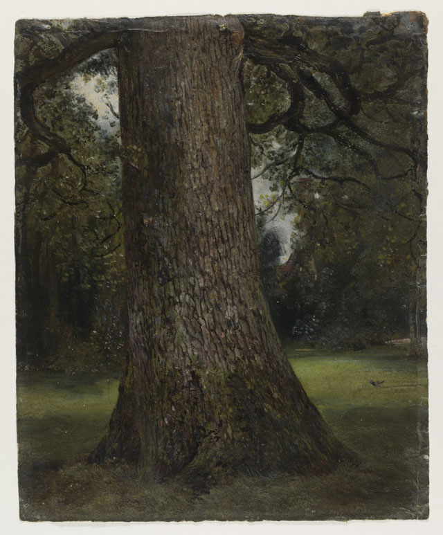 John Constable. Study of the Trunk of an Elm Tree, c1821-28. © Victoria and Albert Museum, London.