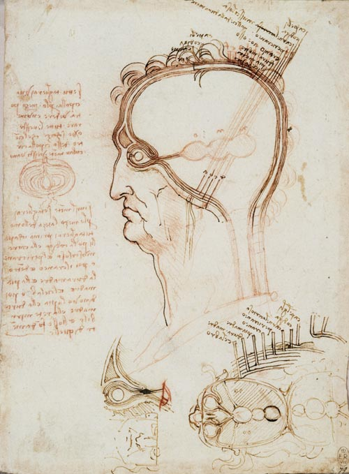 Leonardo da Vinci. Vertical and horizontal sections of the human head and eye, c.1489. 20.3 x 14.3cm. Pen and ink and red chalk. Royal Collection © 2006 Her Majesty Queen Elizabeth II.