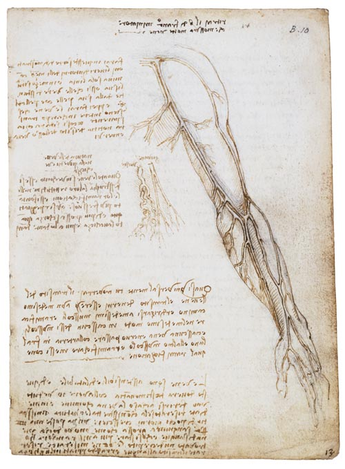 Leonardo da Vinci. Vessels of the arm with comparison of vessels in the old and the young, c.1508. Pen and ink 19 x 13.3 cm. Royal Collection