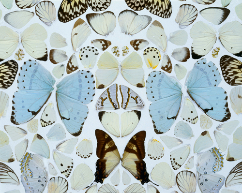 Damien Hirst. <em>Sympathy in White Major – Absolution II,</em> 2006 (detail). Butterflies and household gloss on canvas. © Damien Hirst and Science Ltd. All rights reserved. DACS 2012. Photograph: Prudence Cuming Associates.