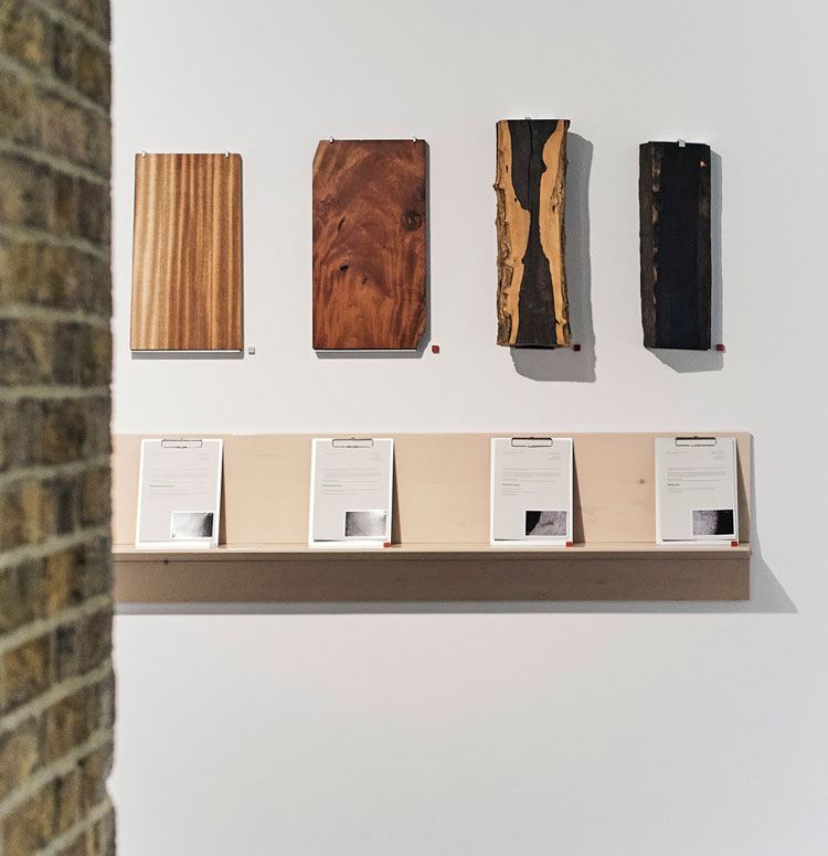 On the Anatomy of Trade, 2020. Anatomical wood analysis. Formafantasma, Cambio, installation view, Serpentine Sackler Gallery, London, 4 March – 17 May 2020. Photo courtesy Formafantasma.