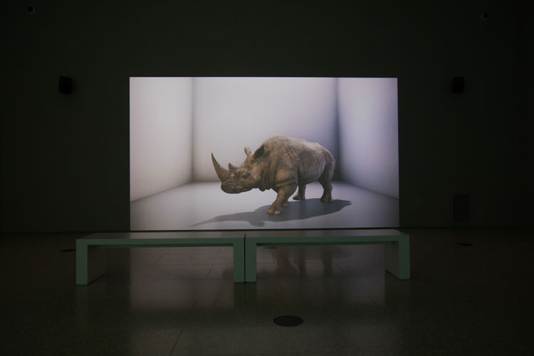 Alexandra Daisy Ginsberg. The Substitute was commissioned by the Cooper Hewitt museum in New York. Using CGI animation, Ginsberg conjures the extinct northern white male rhino back to life on a 5-metre screen, while a second screen reveals the learning process of an AI tool, DeepMind, which replicates the mammalian brain's 'grid cell' navigational patterning. © the artist.