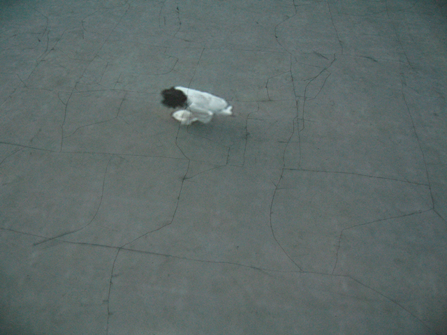 Shilpa Gupta. Untitled, 2006. Video projection with sound and drawing on floor, 8 min loop.