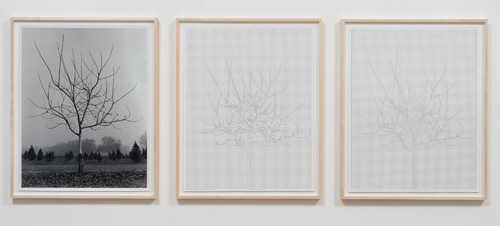 Charles Gaines. Walnut Tree Orchard, Set 1, 1975-2012. Mechanical pen on paper, photo. Triptych, 29 x 23 in each. Image courtesy of the Artist and Susanne Vielmetter Los Angeles Projects.