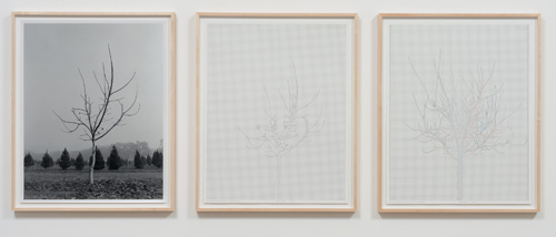 Charles Gaines. Walnut Tree Orchard, Set 3, 1975-2012. Mechanical pen on paper, photo. Triptych, 29 x 23 in each. Image courtesy of the Artist and Susanne Vielmetter Los Angeles Projects.