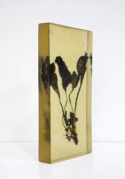 Vibha Galhotra. Consumed Contamination, 2012. Organic matter embedded in resin, 15 5/8 x 7 1/2 x 2 in.