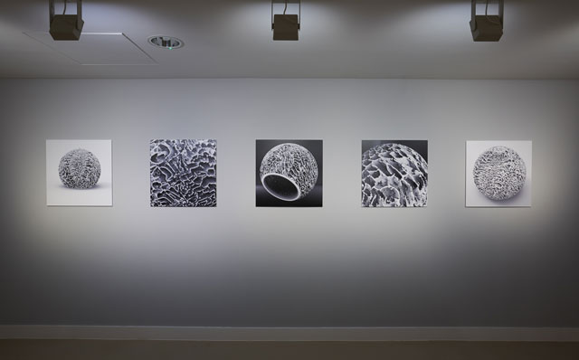 Installation view, Elpida Hadzi-Vasileva, Making Beauty, Djanogly Gallery, Photograph: Nick Dunmur.
