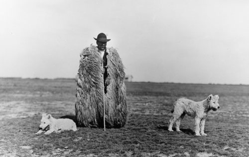 Rudolf Balogh. <em>Shepherd with his Dogs, Hortobagy</em>, c1930. Silver gelatin print, 180 x 290 mm. Hungarian Museum of Photography. Copyright Hungarian Museum of Photography.