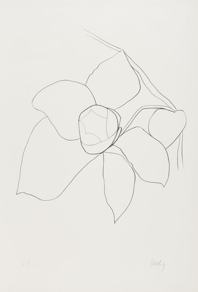 Ellsworth Kelly. Camellia II, 1964–65. Transfer lithograph on Rives BFK paper, 35 5/8 x 24 1/4 in (90.5 x 61.6 cm). Norton Simon Museum, Gift of the Artist, 1969, P.1969.044. © Ellsworth Kelly Foundation and Maeght Éditeur.