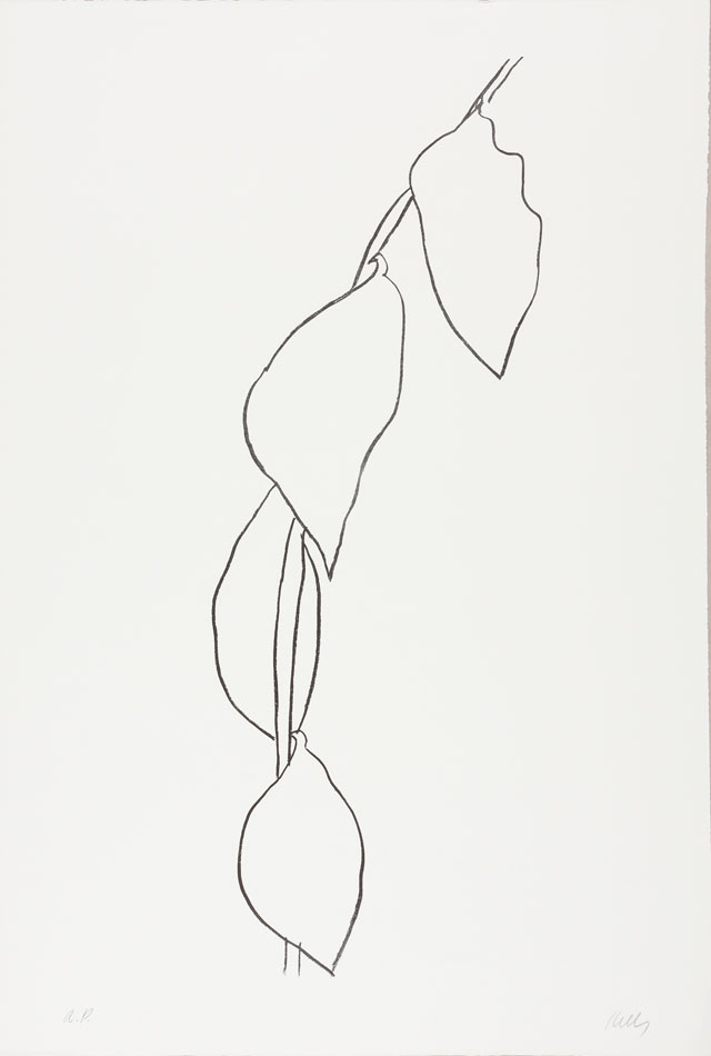 Ellsworth Kelly. Lemon Branch (Branche de Citron), 1965–66. Transfer lithograph on Rives BFK paper, 35 3/8 x 24 1/8 in (89.9 x 61.3 cm). Norton Simon Museum, Gift of the Artist, 1969, P.1969.059. © Ellsworth Kelly Foundation and Maeght Éditeur.