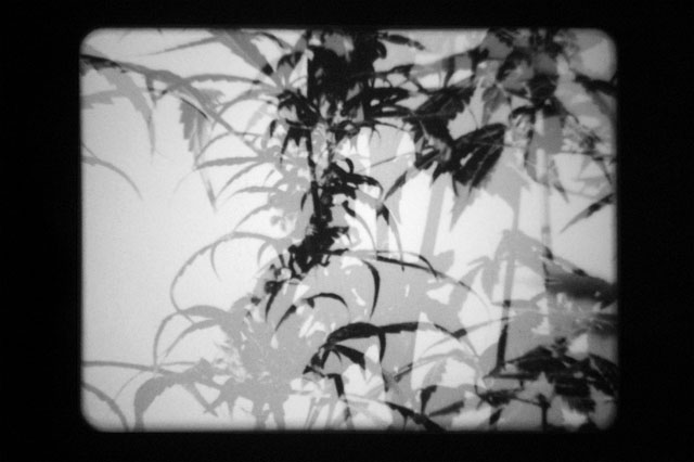 Joachim Koester. The Hashish Club, 2009. 16mm film, animation, black and white, silent 6 min 6 sec, film still. Courtesy the artist and Galleri Nicolai Wallner, Denmark.