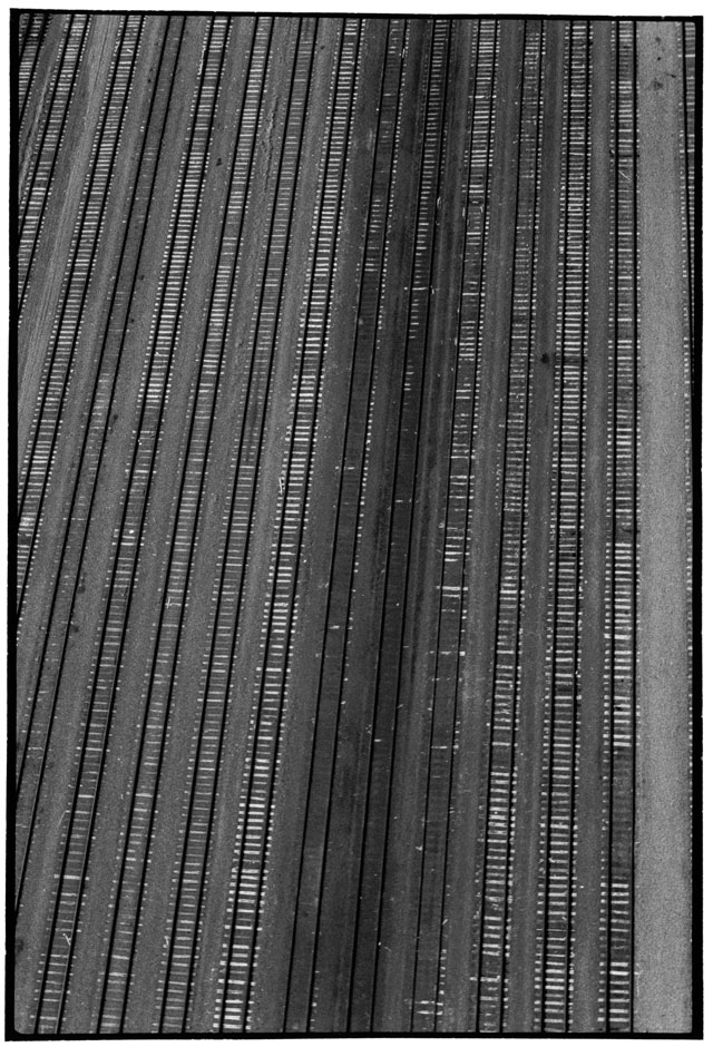 Zoe Leonard. Untitled Aerial, 1986/2007. Gelatin silver print, 82 x 57 cm (32 1/4 x 22 1/2 in). © Zoe Leonard. Courtesy the artist, Galerie Gisela Capitain, Cologne and Hauser & Wirth.