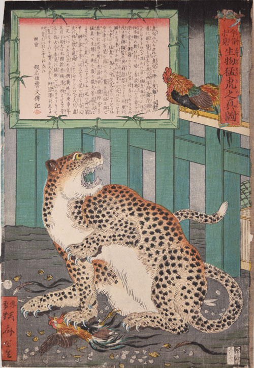 Kawanabe Kyōsai (1831–89), A True Picture of the Fierce Live Tiger Never Seen from the Past to the Present, 1860. Colour woodblock print; 14 x 9 ¾ in. Courtesy Ronin Gallery, New York.