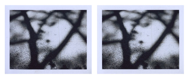 Peter Liversidge. New York Tree Shadow, 2015. Pair of unique Fuji FP-100C photographs, image: 2 7/8 x 3 3/4 in (7.3 x 9.5 cm) each; Fuji: 3 3/8 x 4 1/4 in (8.5 x 10.8 cm) each. © Peter Liversidge. Courtesy: Sean Kelly, New York.