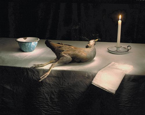 Marian Drew. <em>Tasmanian Swamp Hen with Candle</em>, 2005. 112 x 134 cm. Archival Pigments on German Etching Paper digitally printed. Image courtesy of the artist and Dianne Tanzer Gallery, Melbourne, Australia.