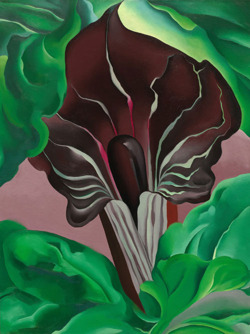 Georgia O'Keeffe. Jack-in-the-Pulpit No. 2, 1930. Oil on canvas. The National Gallery of Art, Washington © 2013 National Gallery of Art, Washington.