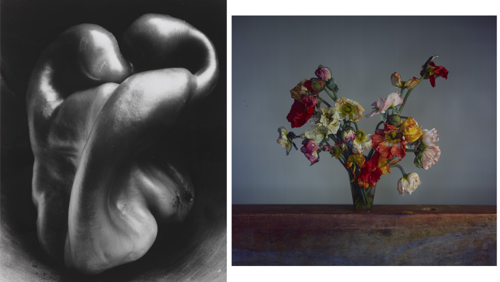 The first major exhibition of photography at the Dulwich Picture Gallery uses nature as a lens to examine the science, history and culture of the medium, while asking what is a 'picture' in the 21st century?