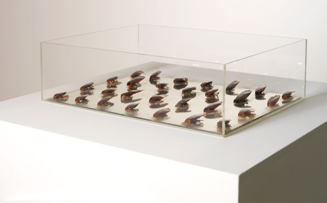 Lygia Pape. Caixa das baratas (Box of Cockroaches), 1967. Acrylic, mirror, and mummified cockroaches. Photograph: Filipe Braga. © Fundação de Serralves, Porto, Portugal. © Projeto Lygia Pape.