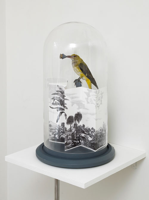 Paul Etienne Lincoln. <em>Sinfonia Torinese/Cyanopica Cyanus (Blue Magpie),</em> 2005. Bell jar containing Taxidermied Cyanopica Cyanus and pigment print with gouache additions depicting 1/14th of the total mechanical score of Cabiria. Photo: Andy Keate.