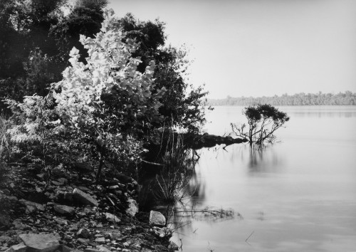 Thomas Joshua Cooper. Looking West towards Exile and the Trail of Tears / The Lower Mississippi River (East Bank). Trail of Tears State Park, near Jackson, Cape Girardeau County, Mississippi, USA, 2010-14. Selenium-toned chlorobromide gelatin silver print, 20 × 24 in (50.8 × 61 cm). Courtesy the artist and Lannan Foundation, Santa Fe, NM.