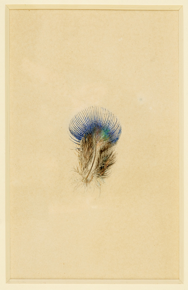 John Ruskin. Study of a Peacock's Breast Feather, 1873. Watercolour on paper. © Collection of the Guild of St George / Museums Sheffield.