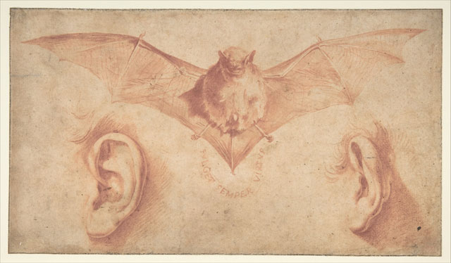 Jusepe de Ribera, A Bat and Two Ears, early 1620s. Red chalk, brush and red wash,