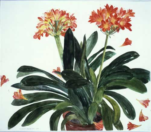 Elizabeth Blackadder DBE RA, <i>Clivia</i>. Watercolour 70 x 80 cm