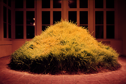 Hans Haacke.        <em>Grass Grows, </em>1969. 