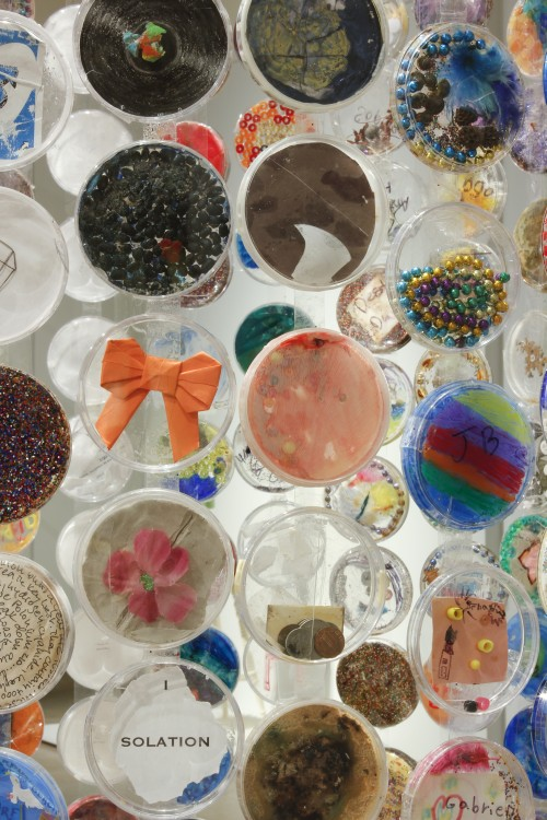 Jim Toia. The Petri Island Project (Detail), 2010–ongoing. Plastic petri dishes and mixed media. Dimensions variable.