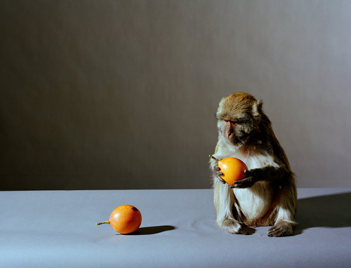 Olivier Richon. <em>Portrait of a monkey with fruit</em>, 2008. C-type print, 91 x 115 cm.