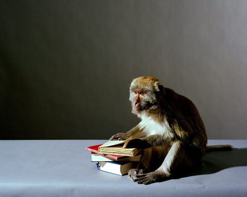 Olivier Richon. <em>Portrait of a monkey with books</em>, 2008. C-type print, 91 x 115 cm.