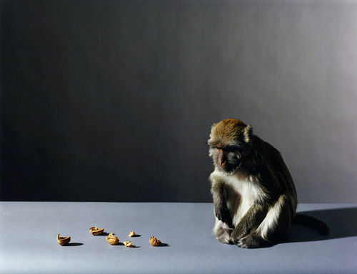 Olivier Richon. <em>Portrait of a monkey with nuts</em>, 2008. C-type print, 91 x 115 cm.