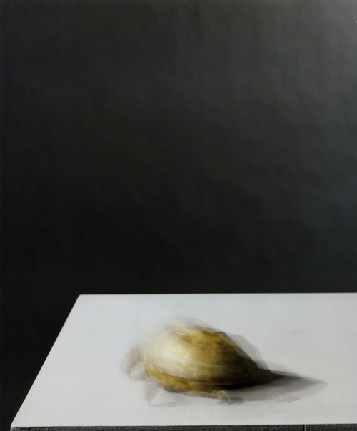 Olivier Richon. <em>Portrait of a tortoise in motion</em>, 2008. C-type print, 90 x 74 cm.